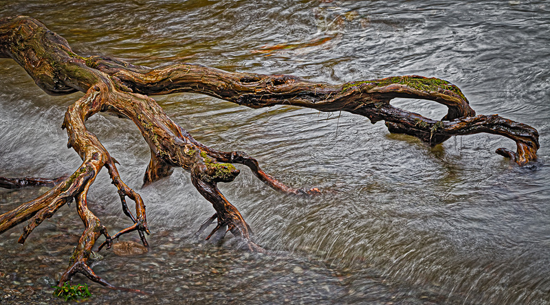 Tree roots washed over by lake water in the Lake District